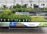 www.impalaplants.com